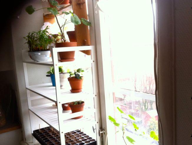 fönsterhylla