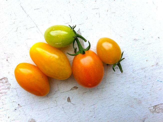 Tomaterna